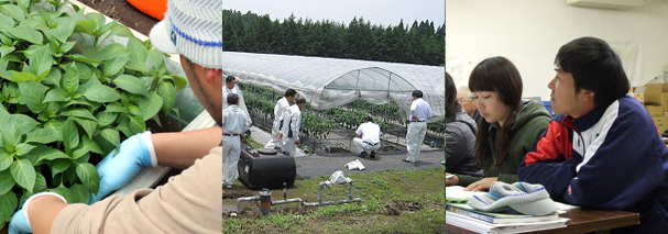 新規就農 研修 実践研修 営農基礎研修