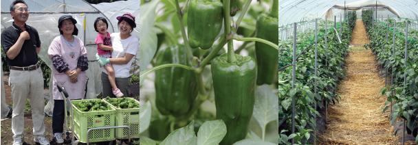 九州 大分県 豊後大野市 新規就農 農業 研修 野菜の栽培を学ぶ インキュベーションファーム