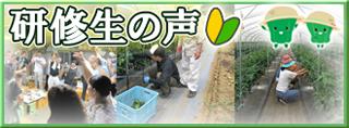 大分県 豊後大野市 新規就農 インキュベーションファーム 研修生の声