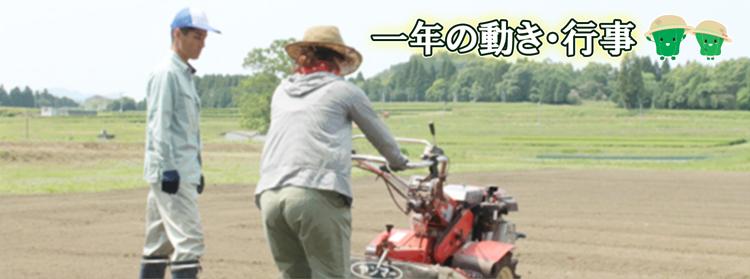 新規就農 農業を学ぶ 豊後大野市インキュベーションファーム 一年の動き